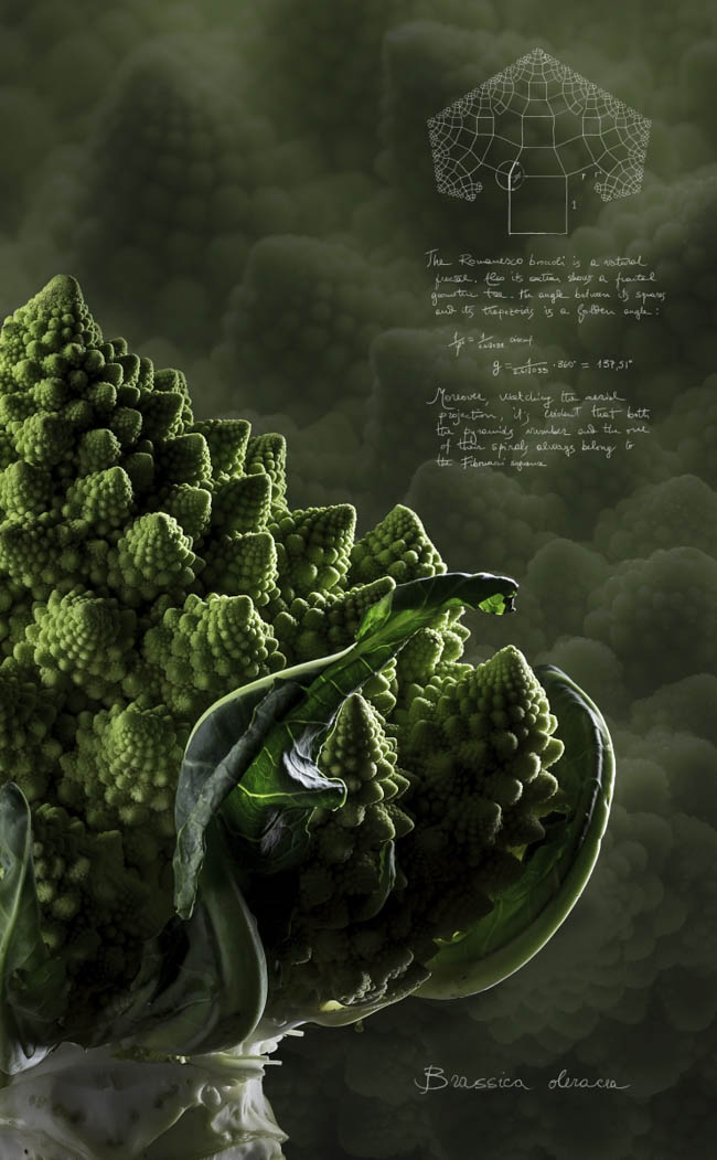 BrassicaoleraceaAssolo_web_54_3319.jpg